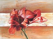 thuilot-ludger-red-amaryllis